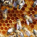 Mit den Bienen durch das Jahr